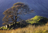 Twisted Tree Skye.