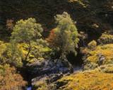 Sparkling Gorge Glencoe