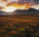 Rannoch Fire Grass
