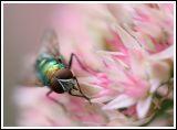 Same Flower II