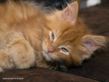 8 weeks young - 2009_A313730-02.JPG