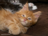 8 weeks young - 2009_A313732-02.JPG