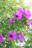 Flores Silvestes de la Region (Noviembre)