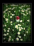 in the garden - alternative