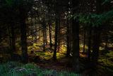 Glen Doll Forest.