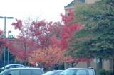 Virginia in the Fall 2009