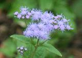 Purple Flower / Flor morada