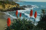 Treasure Island View