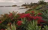 Treasure Island Cliff View