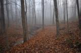 Autumn Woodland Trail Bridge