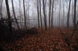 Autumn Foggy Woodlands