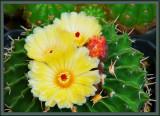 floral_mishmash