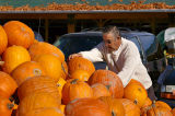 Picking the Pefect Pumpkin, on Vancouver Island BC Canada