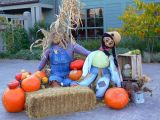 A Day in the Life of Scarecrows