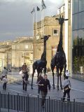 A day in the life of a Scottish Giraffe