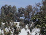 San Diego - Trees... and a wall