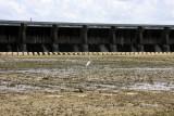 River Drops Eight Feet - Spillway Drying Up - June 9, 2008