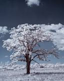 Old Tree-0055-1.jpg