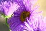 kvetiny3.JPG
