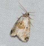Black-dotted maliattha  (Maliattha synochitis), #9049