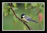 Birds 2006