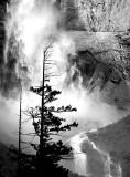 Tree And Yosemite Falls: California