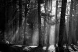 Filtering Light: California
