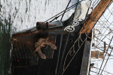 90 Brest 2008 1T1P0267 DxO web.jpg