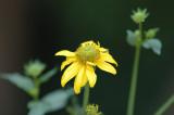 Flagstaff Arboretum
