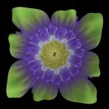 Julia flower #3