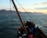 Few whales but plenty of sea-sick tourists