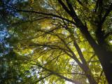 Ashland trees