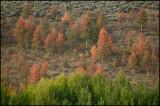 WM---2008-09-18--2202--Yellowstone---Alain-Trinckvel.jpg