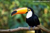 Parque das Aves - Foz do Iguacu- PR 0243.jpg