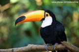 Parque das Aves - Foz do Iguacu- PR 0244.jpg