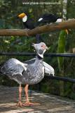 Parque das Aves - Foz do Iguacu- PR 0250.jpg