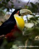Parque das Aves - Foz do Iguacu- PR 0274.jpg