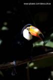 Parque das Aves - Foz do Iguacu- PR 0277.jpg