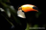 Parque das Aves - Foz do Iguacu- PR 0278.jpg