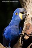 Parque das Aves - Foz do Iguacu- PR 0285.jpg