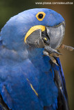 Parque das Aves - Foz do Iguacu- PR 0291.jpg