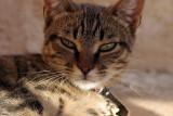 Formentera-Katze.jpg