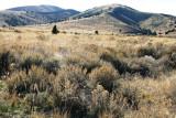 Sagebrush Steppe Habitats