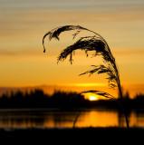 sunset 110809_MG_0478