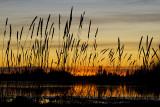 sunset 110809_MG_0538
