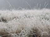 Frosty and foggy morning, Loch Lomond NNR