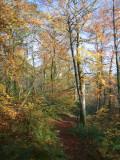 Dalzell Woods