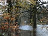 River Clyde Flood at Baron's Haugh