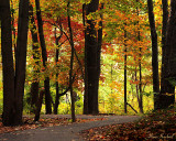 Autumn Walk in Maryland