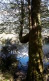 Tree by Mirror Lakes